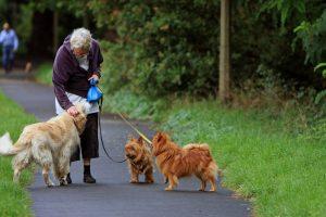Dog-senior-australian-terrier-164087_1280