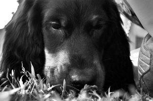 dog-park-439082_1280