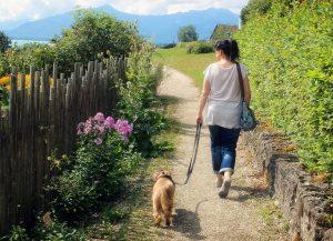 dog-walk-woman-892309_1920