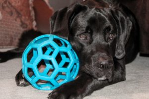 dog-ball-lov1453739_1920