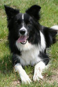 dog-460525_1920