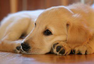 puppy-1187270_1920