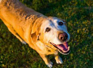 old-dog-1